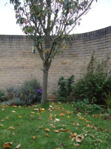 My back garden start autumn 151013
