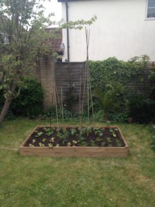 Back garden raised bed with plants Mon 240417
