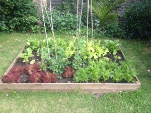 Raise vegetable bed